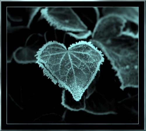 http://ange-noir.cowblog.fr/images/coeurdeglace.jpg