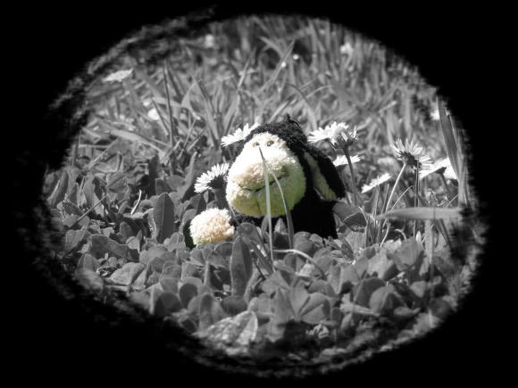http://ange-noir.cowblog.fr/images/montou.jpg